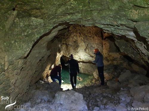 Sampling in Šnjetica cave.