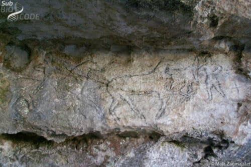 Drawings on the walls at the entrance to Vjetrenica cave.