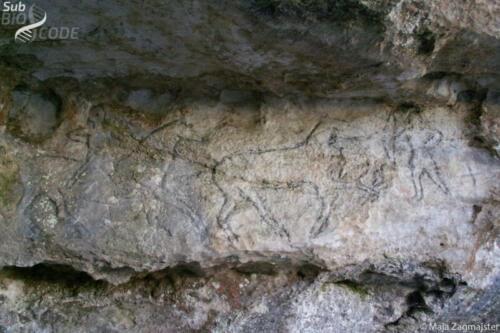 Gravirani crteži u stijeni na ulazu u špilju Vjetrenicu.
