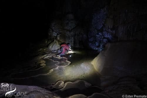 Sampling tiny invertebrates on the water surface in Mrcine cave.