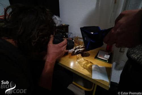 Behind the scenes of making beautiful photos of live cave animals.