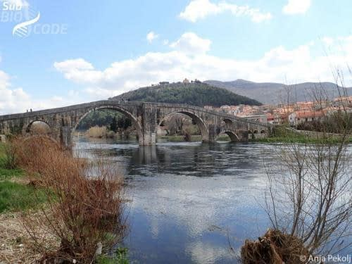 We also sampled a springs near Trebišnjica, just downstream of the Arslanagića Bridge.